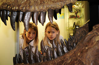 Dinosaur Museum Aathal