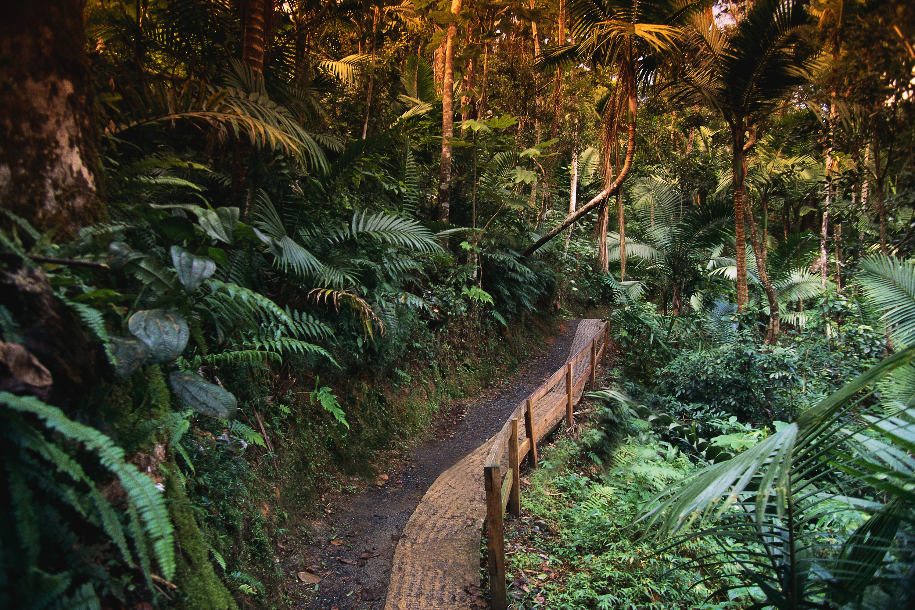 Trail in El Yunque Rainforest