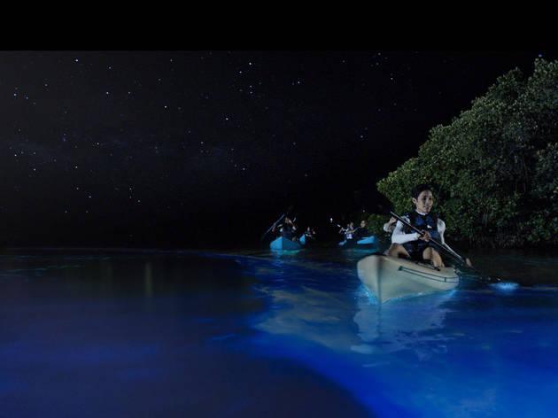 Vieques Bio Bay