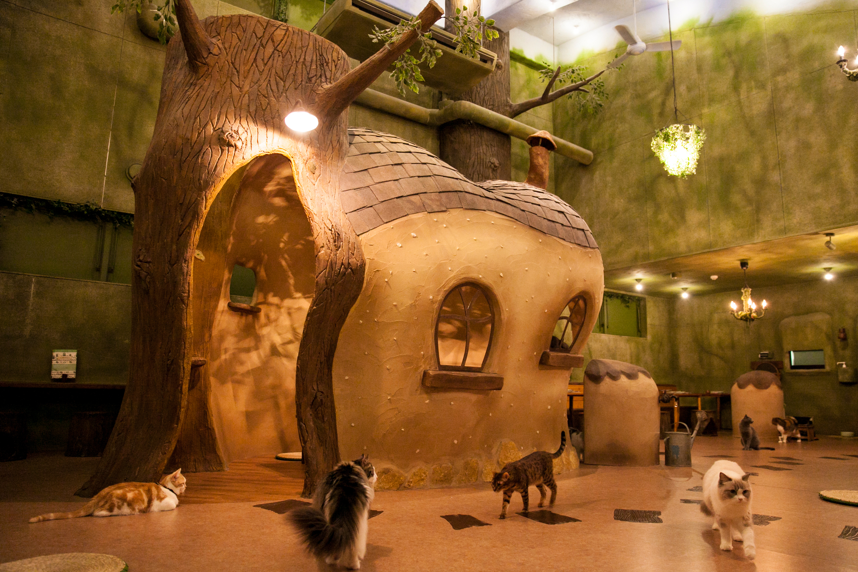 Biggest Cat Cafe The World