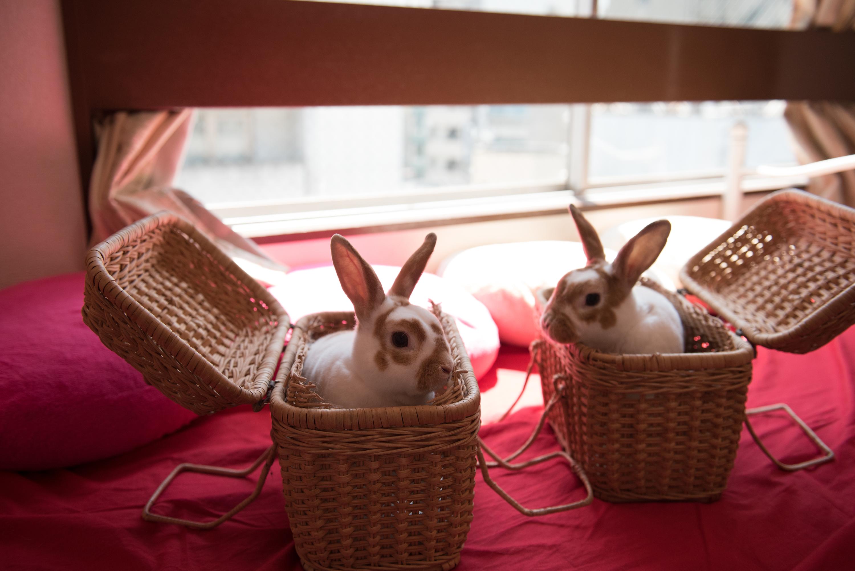 The top 10 animal cafés in Tokyo