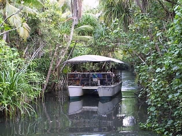 14. 椰子の密林を進む