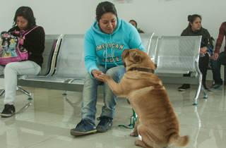 (Foto: Cortesía Hospital Público Veterinario Naucalpan)