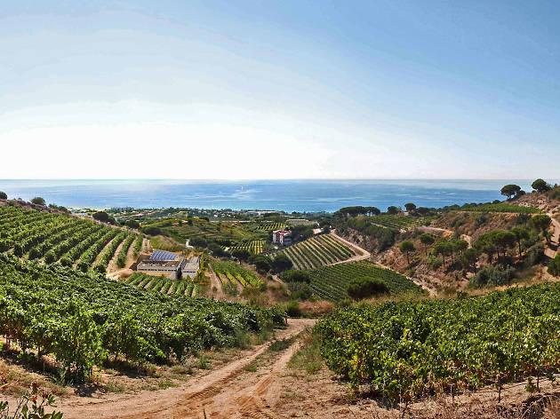 Wine Courses Barcelona