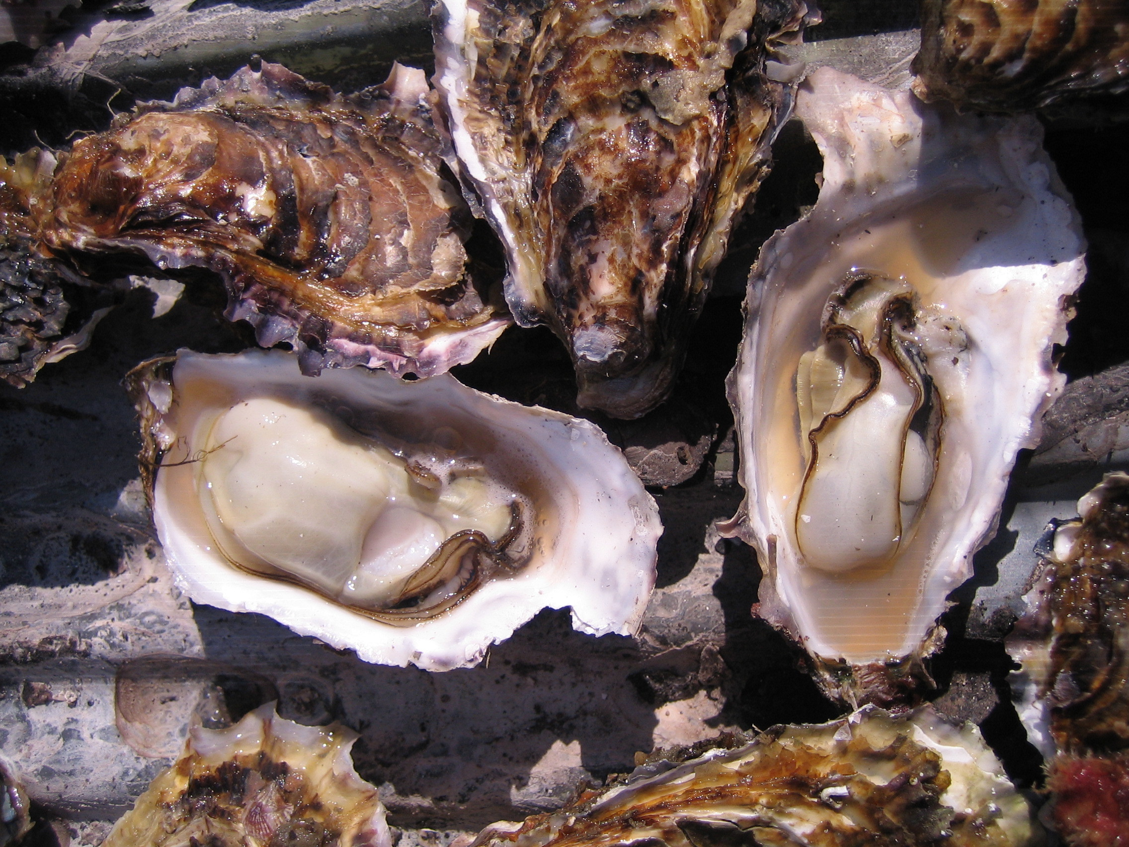 Gorge on fresh oysters