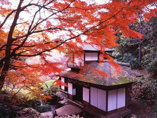横浜の名勝で紅葉狩りする。