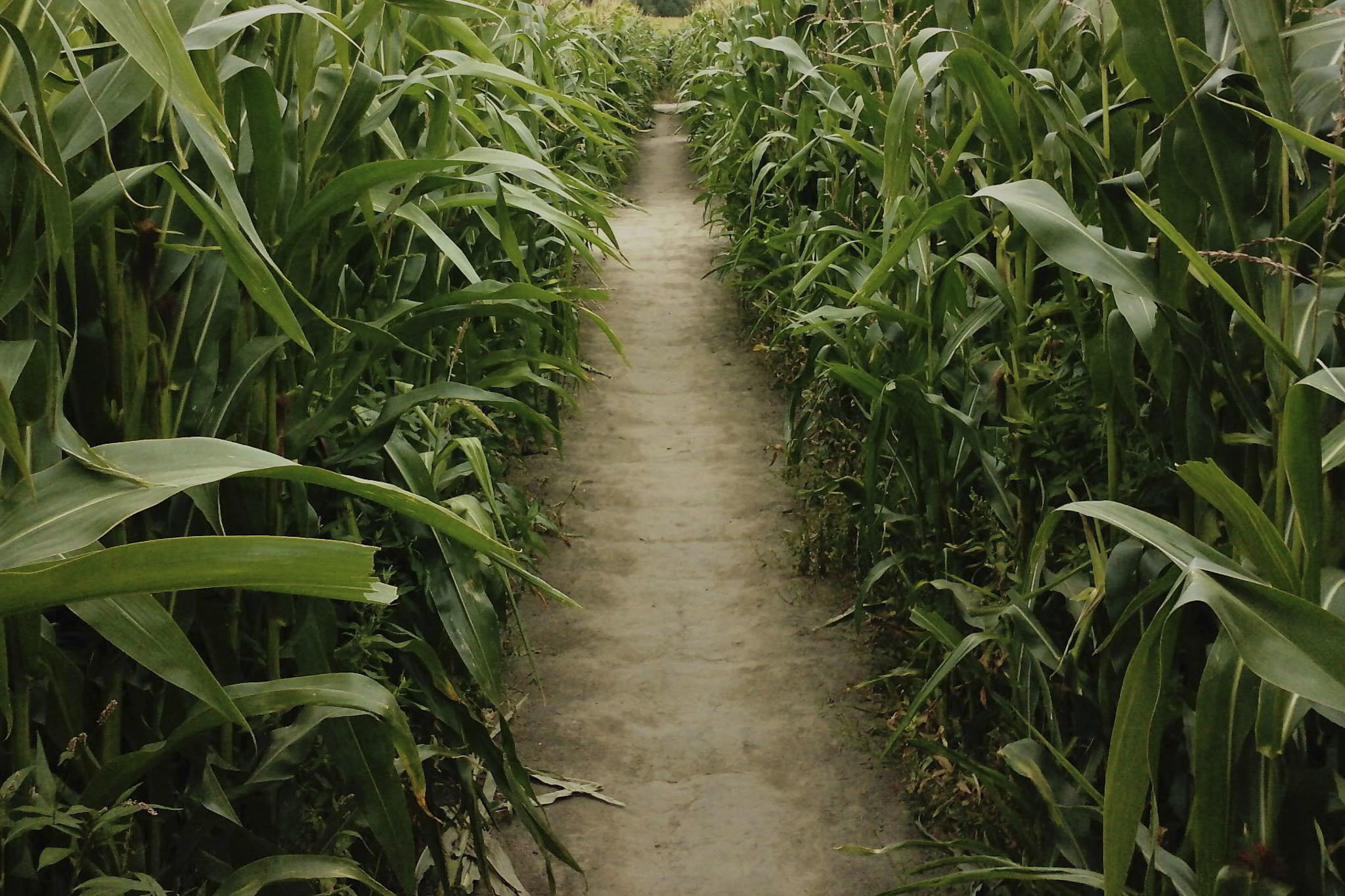 The best corn mazes near Chicago
