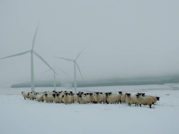 Patricia Glennie's flock of sheep with windfarm turbines at the Threeburnford farm, Lauder, Scottish borders