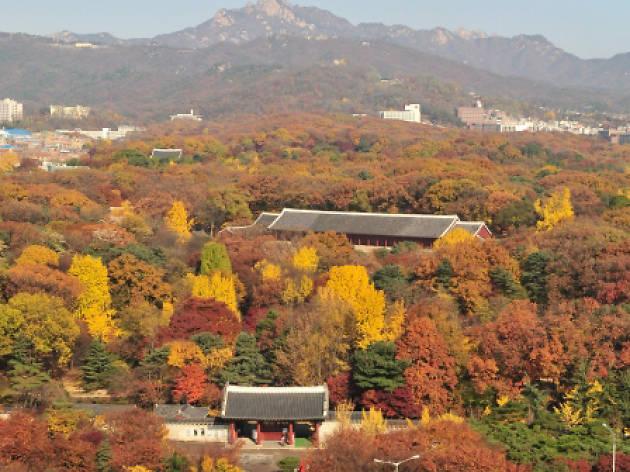 올가을 서울에서 절대 놓치면 안 될 10가지