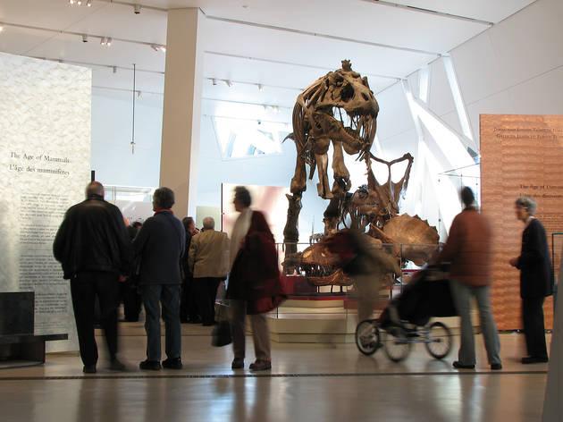 (Photograph: Courtesy Royal Ontario Museum)