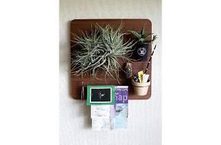 Bizarre Plants Showcase at BRICK & MORTAR