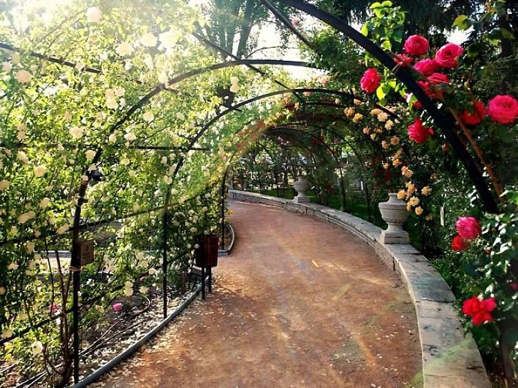 Oeste park rose garden