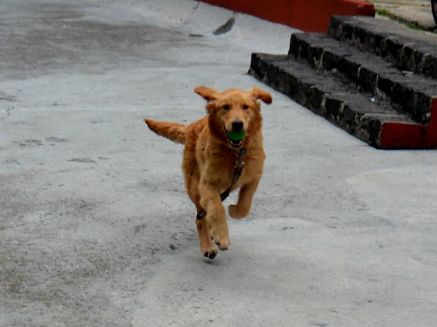 Max corre con pelota