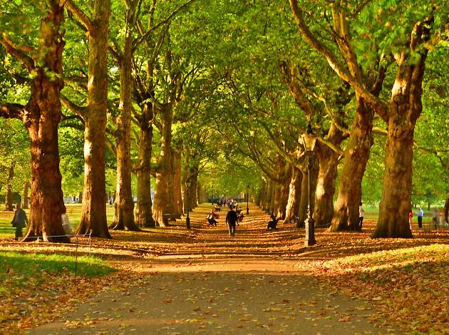 Green Park Avenue in Autumn