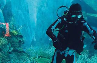 S.E.A Aquarium
