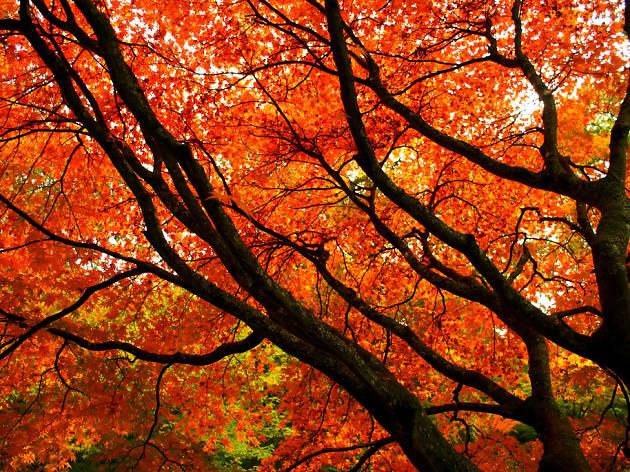 Eight autumnal adventures in and around Bristol