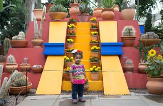 Frida's Fall Harvest