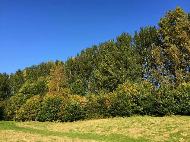 Autumn Kersal Dale