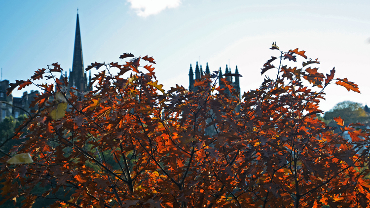 edinburgh autumn leaves skyline
