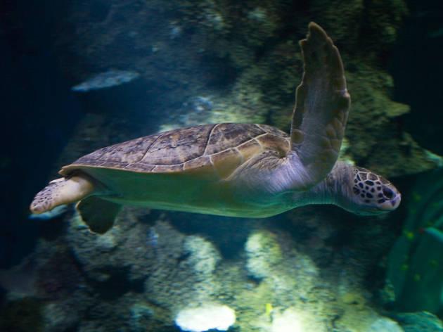 turtle, sea life aquarium
