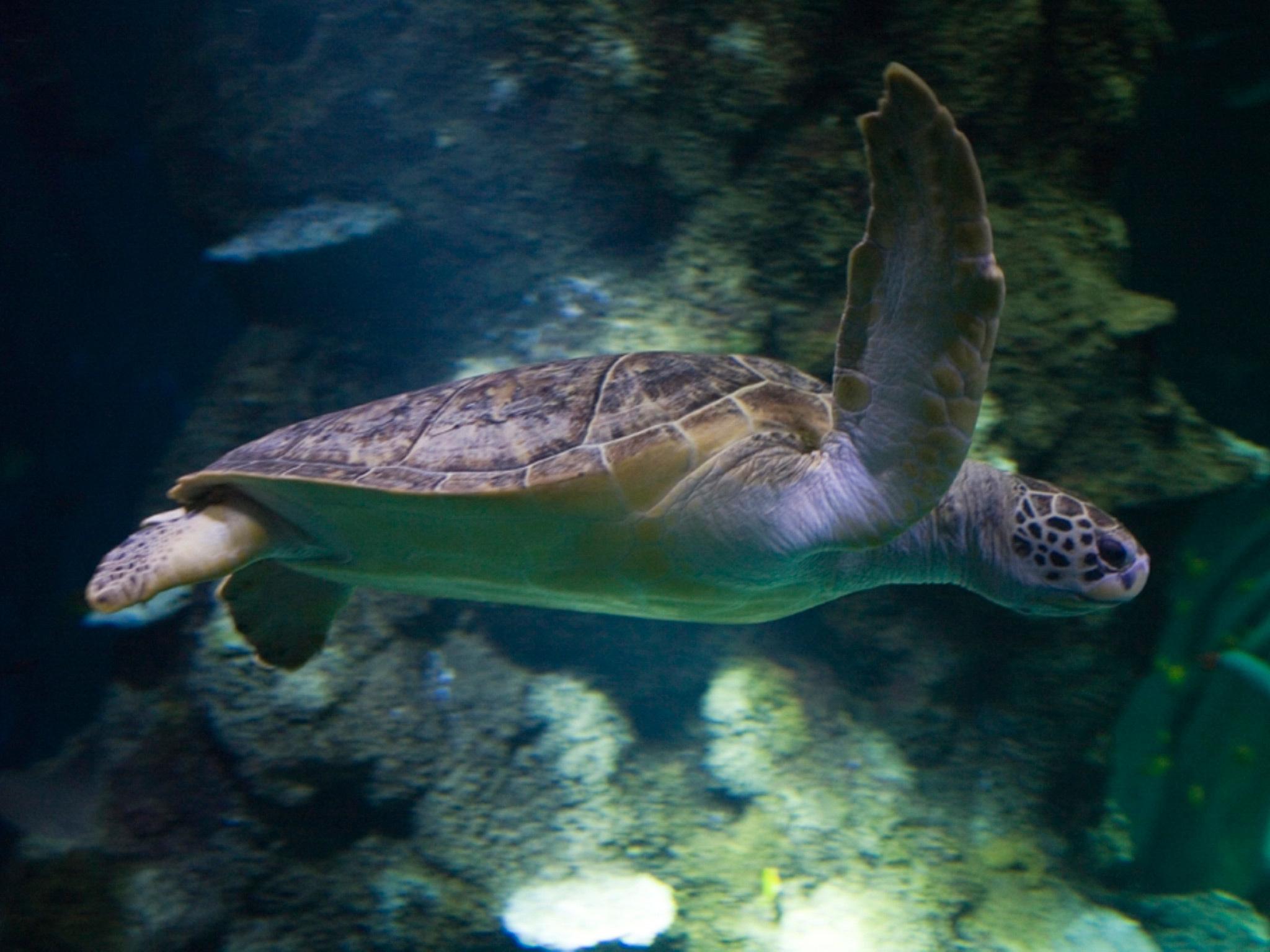 VIP Turtle Feeding Experience at Sea Life London Aquarium