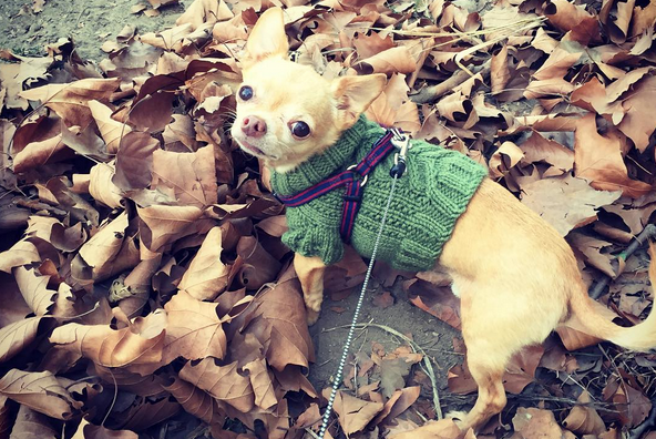 12 adorable photos of dogs in sweaters