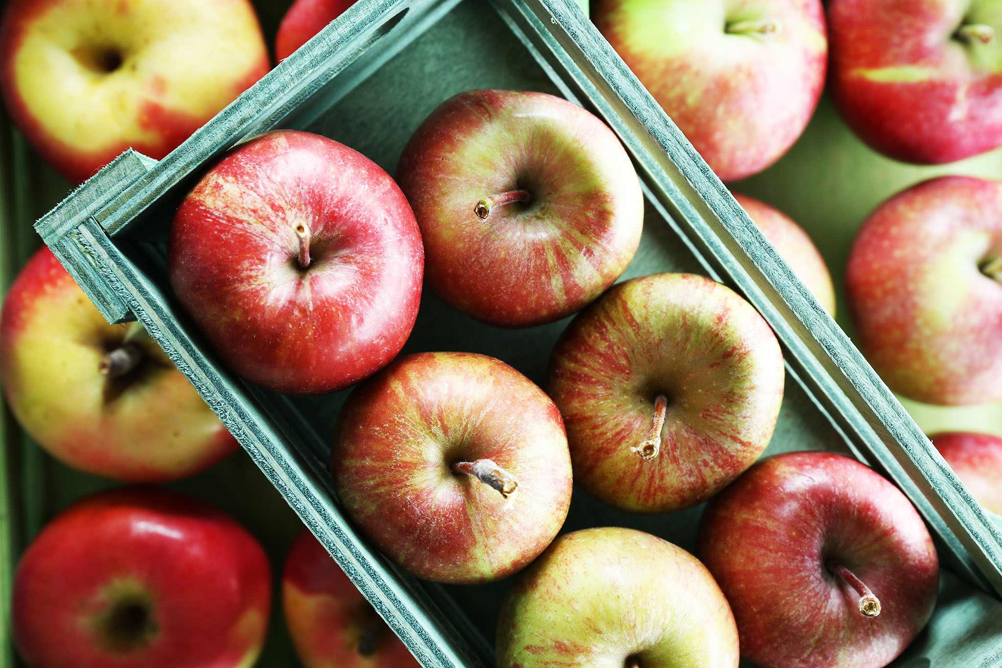 Where to go apple picking near NYC