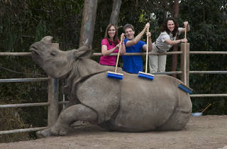 (Photograph: Courtesy San Diego Zoo/Ken Bohn)