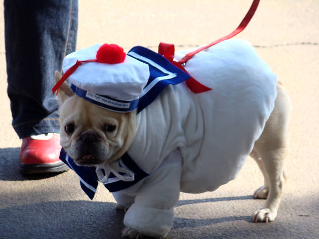 The Potrero Pet Parade, one of the best Halloween events in San Francisco