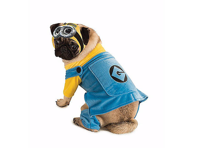 Minion pet costume, $20, at spirithalloween.com