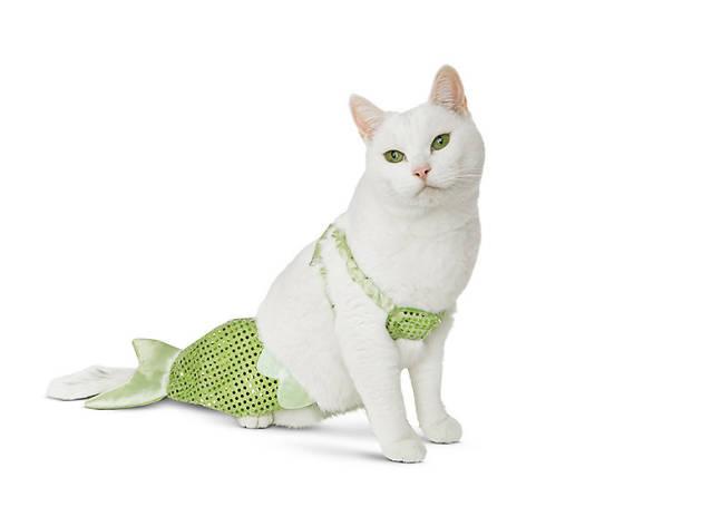 Petco Halloween Kitty of the Sea Mermaid cat costume, $10, at petco.com