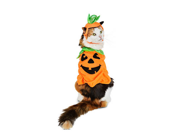 Petco Halloween Purrfect Pumpkin cat costume, $12, at petco.com