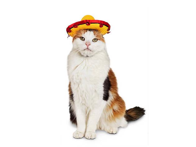 Petco Halloween Sombrero cat costume, $10, at petco.com