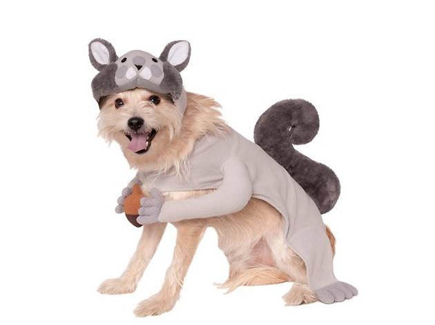 Squirrel pet costume, $15, at target.com
