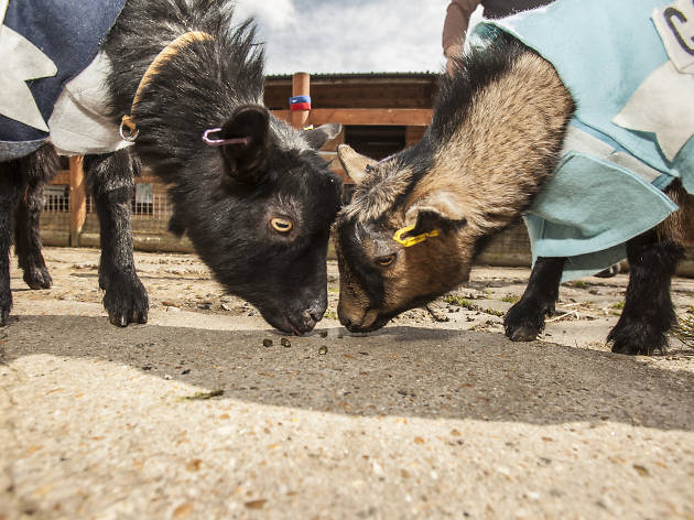 Meet the characterful creatures at Spitalfields City Farm