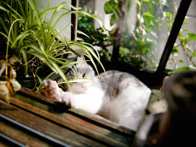 古民家で猫とくつろぐ。