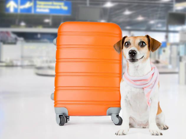 Mascota a bordo Volaris