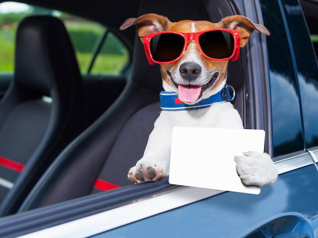Cabify es petfrendly, puedes viajar con tu perro