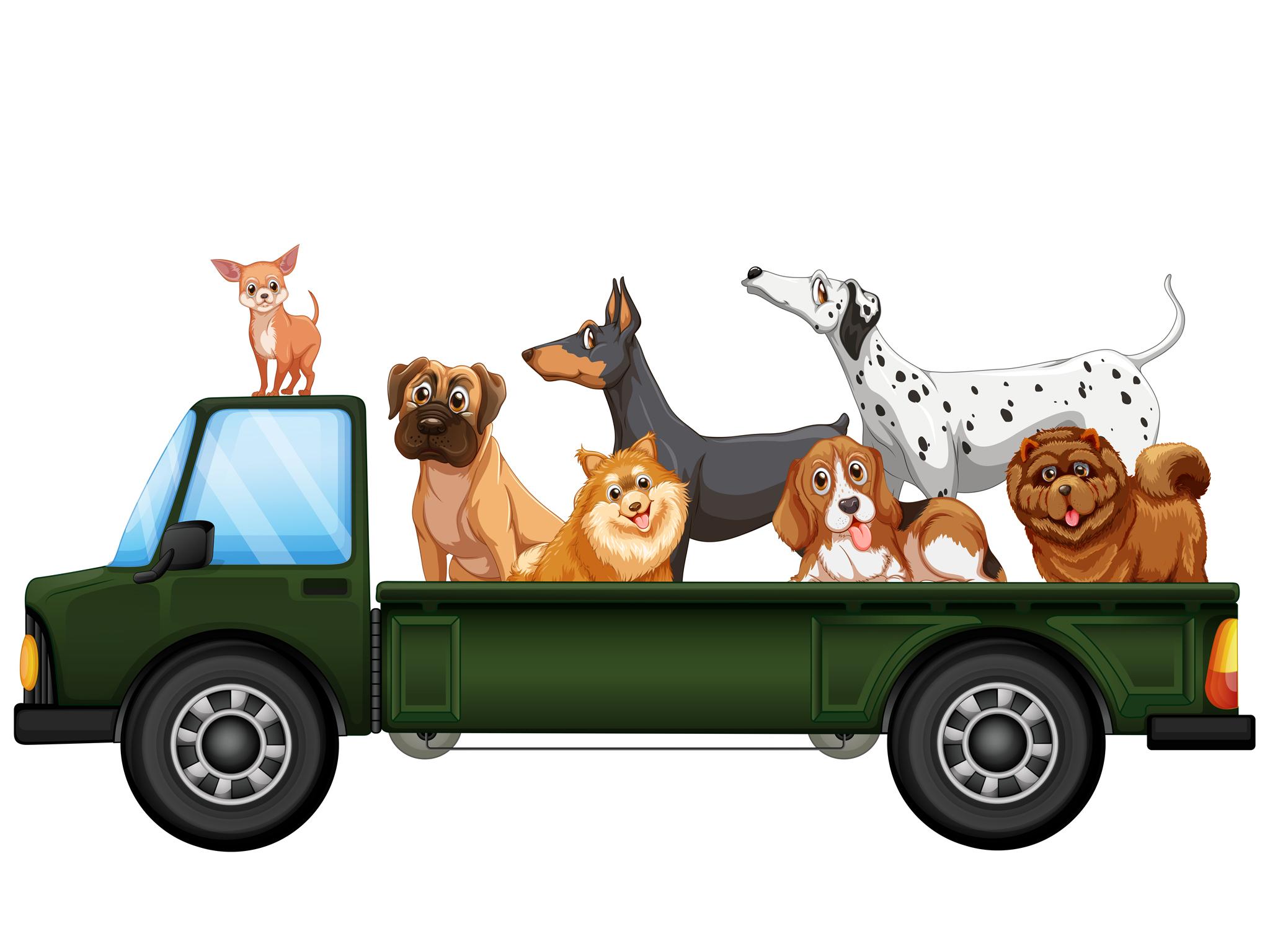 Transporte para mascotas en la Ciudad de México