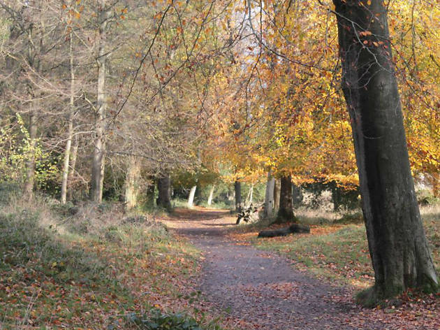 Photo of Leigh Woods in autumn