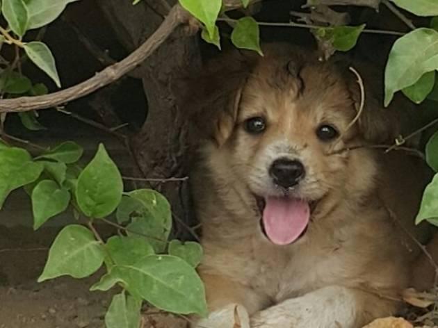 Malaysian Dogs Deserve Better adoption drive