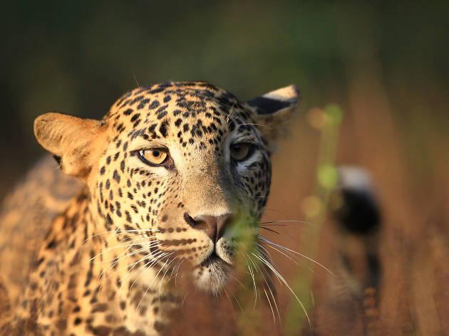 The majestic wilderness of Wilpattu National Park