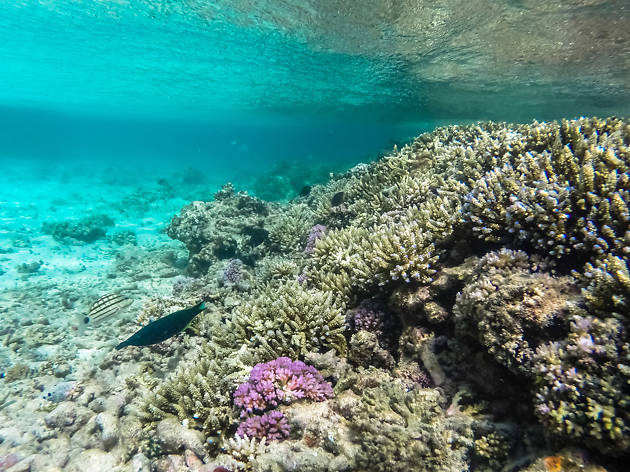 Home to majestic coral reefs