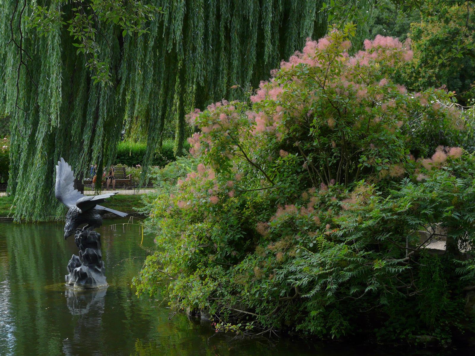 Admire the roses in Regent's Park