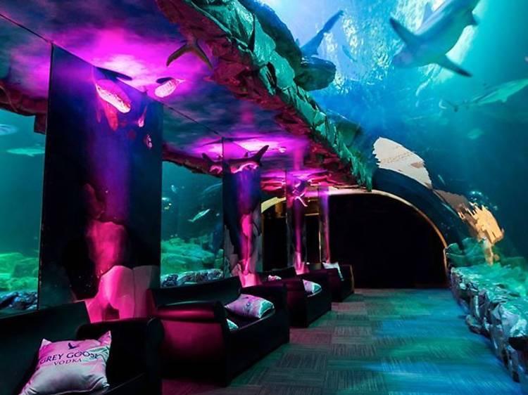 Dans un aquarium
