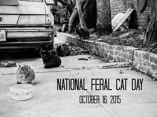 National Feral Cat Day: Faces of Feral