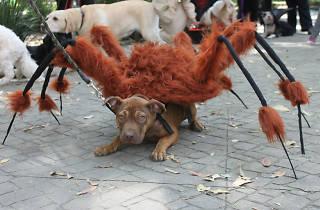 Proyección de Frankiwinee para perros