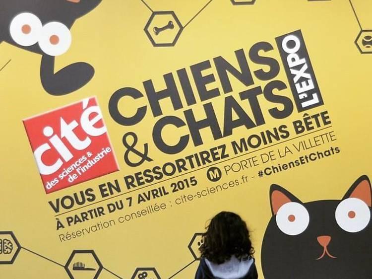 Ressortir moins bête de l'exposition 'Chiens & Chats'