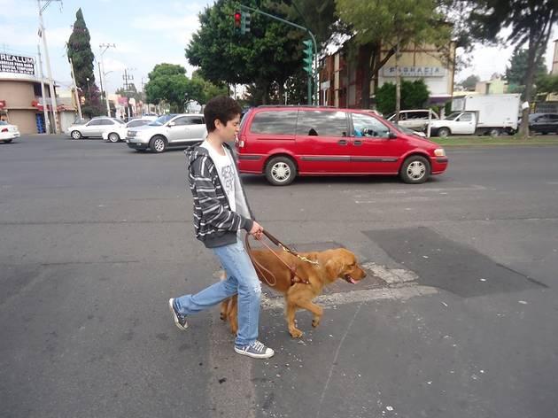 (Foto: Cortesía Escuela para Entrenamiento de Perros Guía para Ciegos I.A.P.)