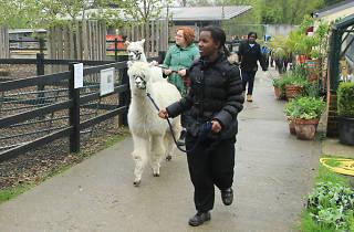 Crystal Palace Park Farm
